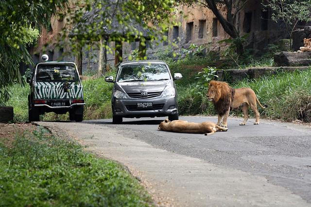 taman-safari-bogor1
